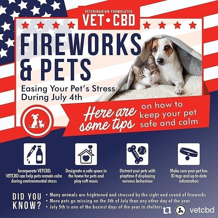 Wildfire Preparedness Tips For Pet Safety During Covid 19 Fido Friendly