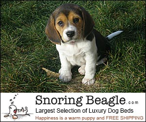 Snoring Beagle - luxury Dog Beds
