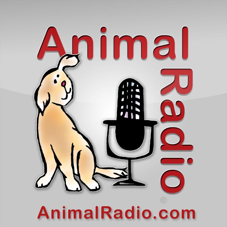 Fido Friendly Big Dog Black Friday Contest 2018 Mom N Bab Socks 3in1 Girl Animal Radio